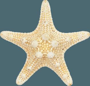 Camper à Penmarc'h - étoile de mer