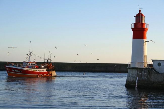 Randonnées et visite du Finistère - Port du Guilvinec