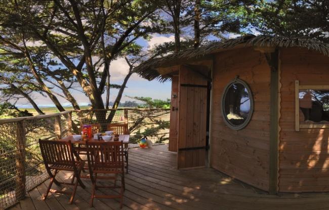 Cabane dans les arbres - cabane